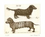 Canes plurimum latrantes raro mordent (Pes, ktorý šteká nehryzie)