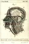 Ratio non clauditur Loco (Mozog)